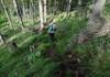 Steiler Steig im Wald