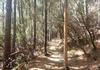 Lichte Wald