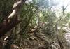 Steile Weg um den Wasserfall