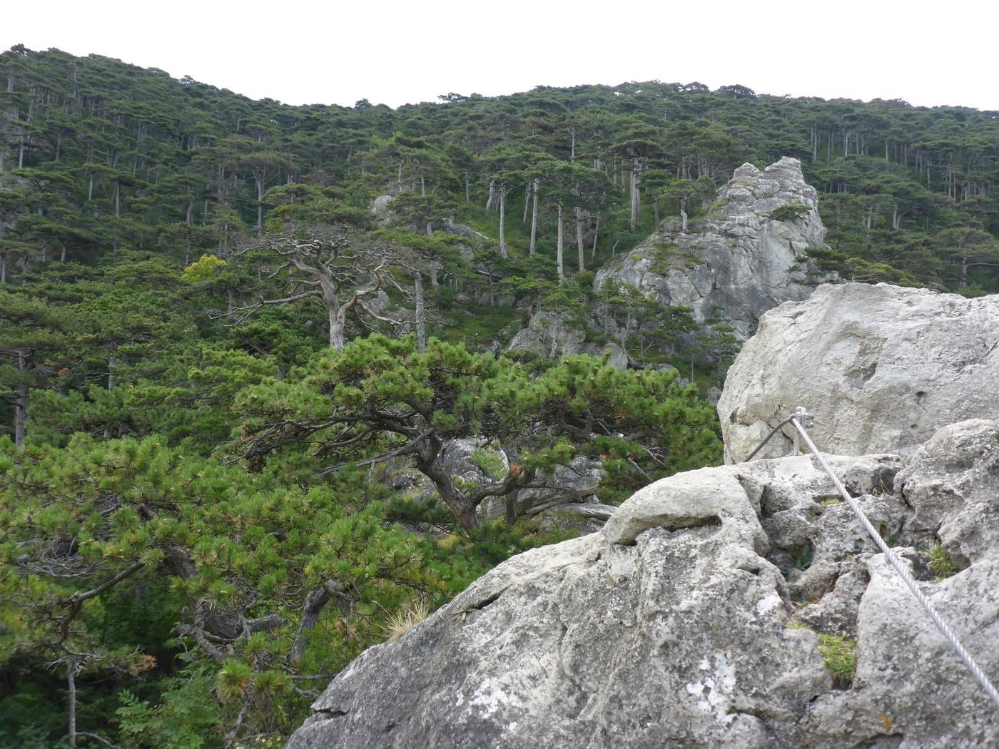 Klettersteig Mödling : Mödlinger klettersteig wienerwald gbl