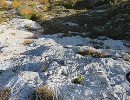Ave Maria - Rote Wand - Grazer Bergland - Klettern