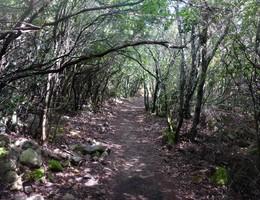 Monte Santu - Sari - Korsika - Wandern