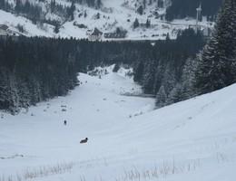 Polster über den Handlgraben - Hochschwab - Skitour