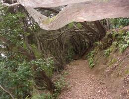 Wandern auf Teneriffa, von leicht bis Teide