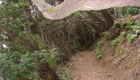 Camino im Regenwald