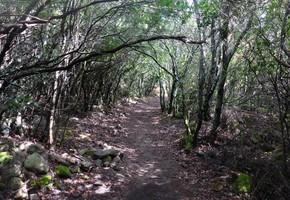 Monte Santu - Sari - Korsika
