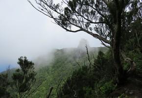 Rund um den Chinobre - Anaga - Teneriffa