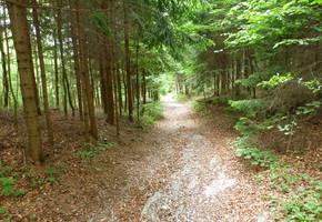 Schöckl vom Falschgraben - Grazer Bergland