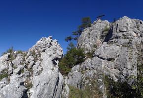 Smultronstället (Wilde Erdbeeren) - Rannerwand - Grazer Bergland