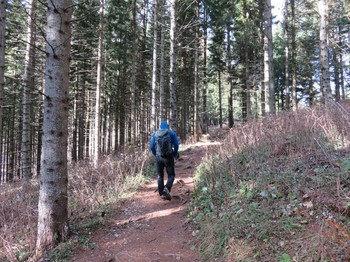 Schöner lichter Wald
